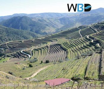 The Tua Valley is part of the Alto Douro Wine Region - West Blue Dreams Porto Luxury Tours Portugal